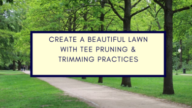 Photo of Create A Beautiful Lawn With Tee Pruning & Trimming Practices